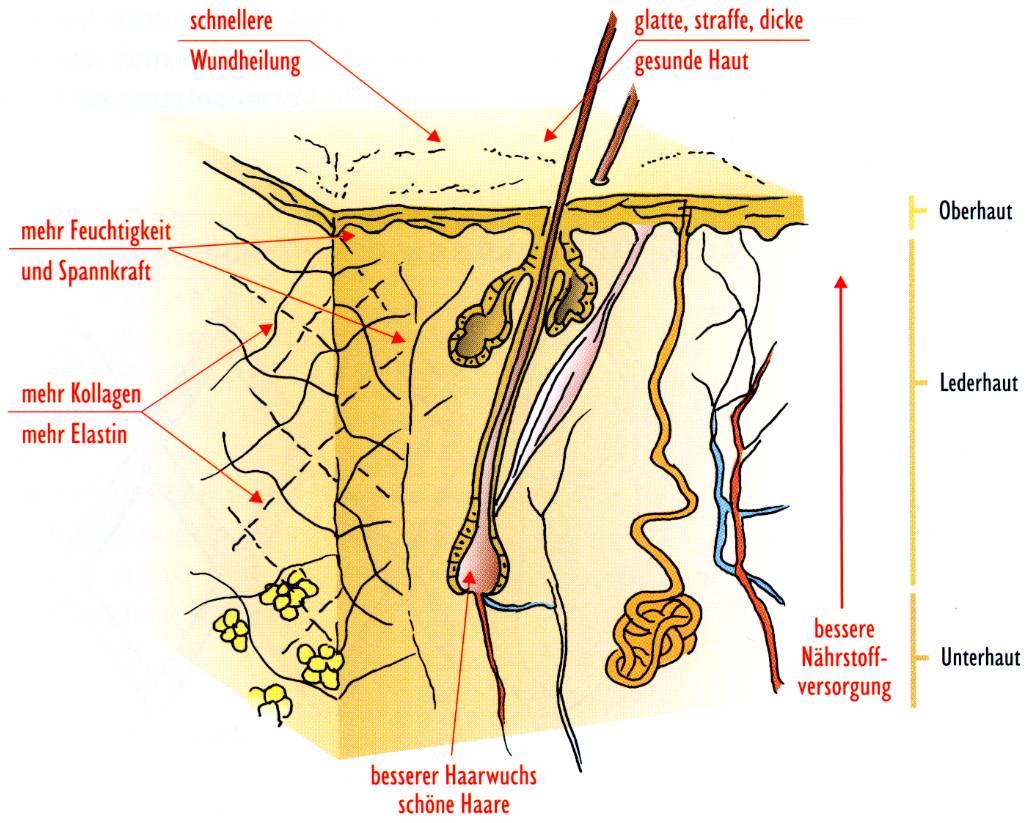 Effekte von Silizium an der Haut Grfik