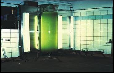 Einarbeitung der Isochrysis in Mineralkomposit