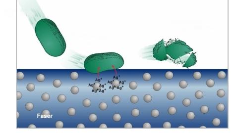 Mikroorganismen reagieren auf Silber
